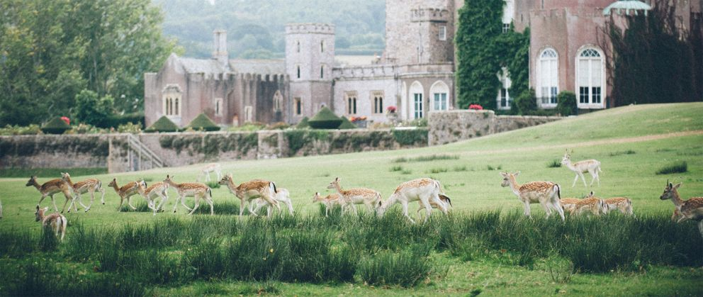 Deer Park - Powderham Castle